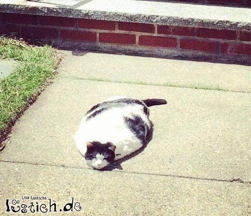 Geschmolzene Katze