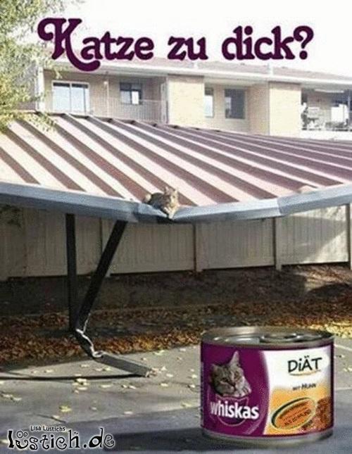 Leckeres Katzenfutter