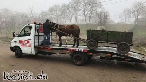 Pferd abgeschleppt