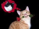 Romeokatze ist verliebt