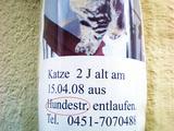 Katze aus Hundestraße entlaufen