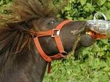 Pferd trinkt Bier