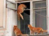 Katzen als Einbrecher