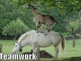Teamwork bei Tieren