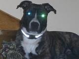 Hund vom anderen Stern
