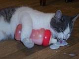 Katze mit Fläschchen