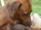 Hund mag Schwein