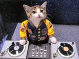 DJ Katze