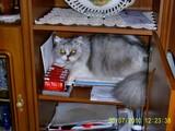 Katze beim rauchen erwischt!