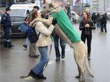 Riesengroßer Hund