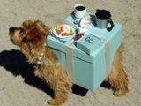 Tisch -Hund