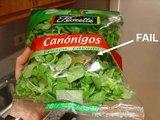 Kröte im Salat