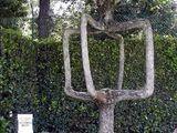 Cooler Baum