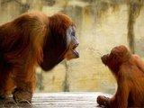 Frecher kleiner Affe