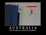 Spinnen in Australien