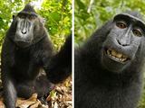 Affe macht Selbstporträt