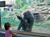 Ungezogener Affe