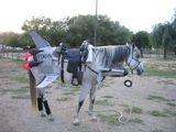 Jet-Pferd