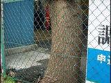 hungriger Baum