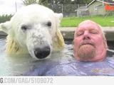 Mit einem Eisbär schwimmen