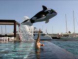 Freiheit für den Wal