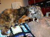 Katze gegen Eule