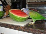 Ich liebe dich, Melone