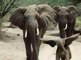 Dumbo hebt ab