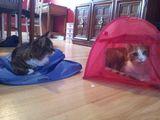 Ein Zelt benutzen