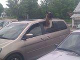 Haustier im Auto warten lassen
