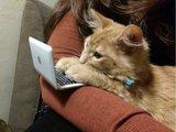 Kleine Katzenbeschäftigung