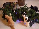 Katzen zu Weihnachten