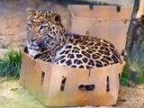 Katzen und Kisten