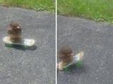 Skater Vogel
