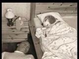 Hundebettchen