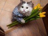 Danke für die Blumen