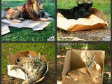 Große Katzen