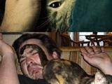 Katzen als Haustier