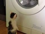 Wenn die Lieblingsdecke gewaschen wird