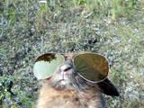 Cooles Bunny