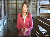 Kamel knabbert an Reporterin
