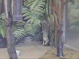 Trauriger Koala