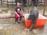 Tollpatschiger Elefant