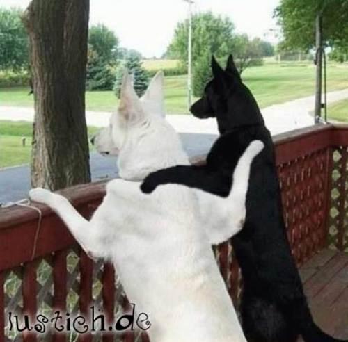 Hunde-Freunde