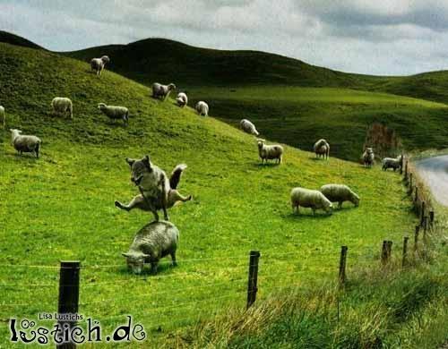 Der springende Wolf