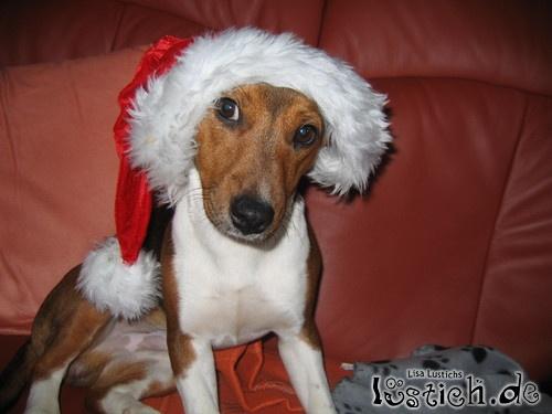 Gruß vom Weihnachts Bodo
