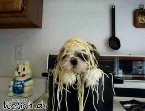 Hund in Suppenschüssel