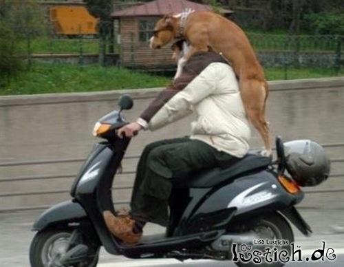 Hund fährt mit