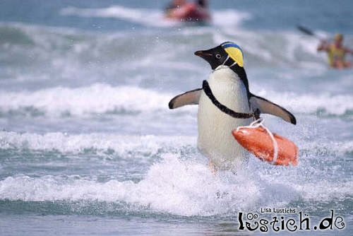 Pinguin-Baywatch