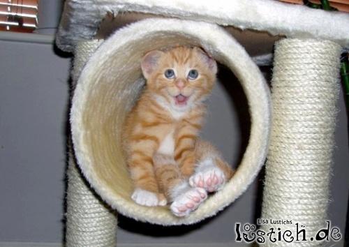 Katze mit lustichem Ausdruck